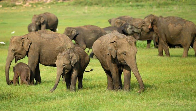 f38ddee4-GETTY-Elephants_1554736504494-407068.jpg