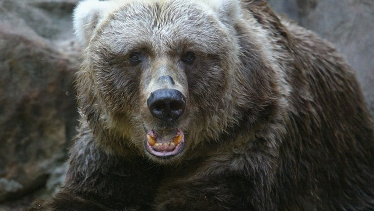 7250d28d-GETTY_brown bear_021019_1549830081489.png-402429.jpg
