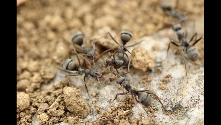 ants pexels_1490106532147.jpg