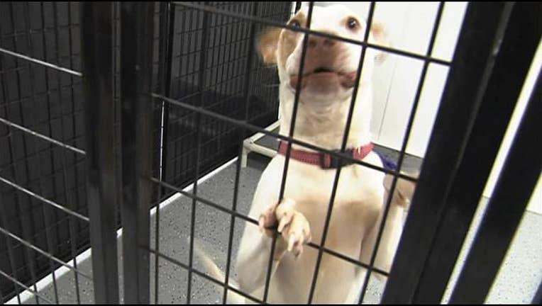 dog_foster_rescue_clean.jpg