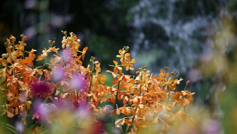 9eed3979-flowers-GETTY-IMAGES_1517323431823.jpg
