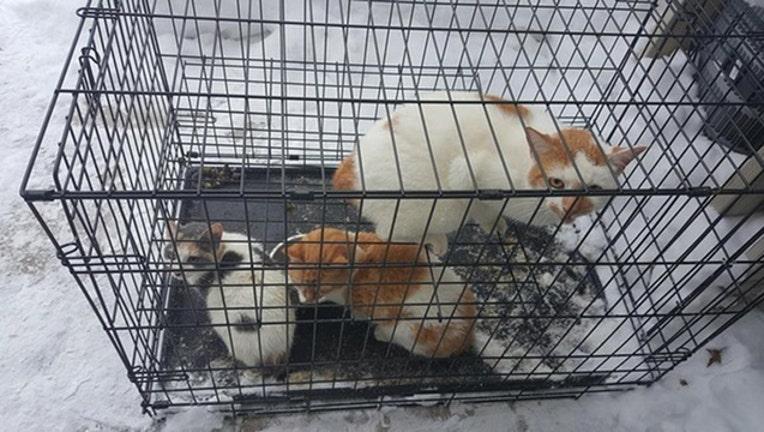 kittiesjpg-d7af3c4dfb81093c_1515034681896-401385.jpg