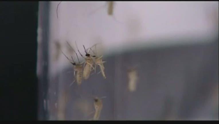mosquito_zika_clean.jpg