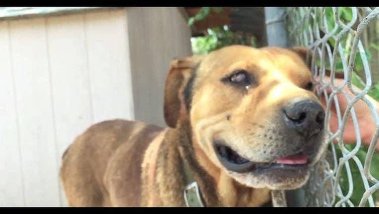 74fd121a-dog_transformation_video.jpg