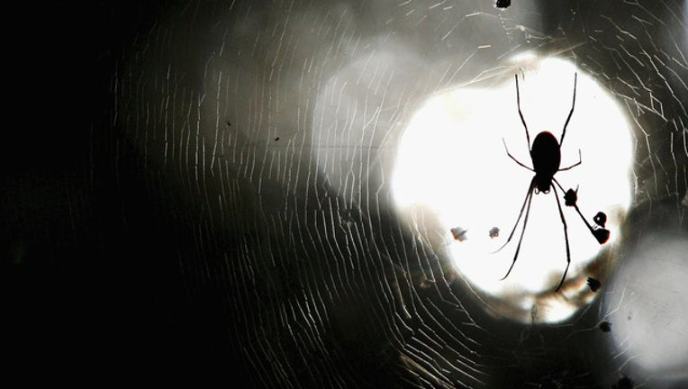 f1e095b6-spider pic getty image 52644080IW006_Concentrated__1523463173663