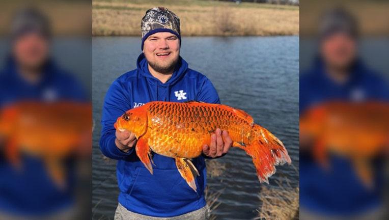 09be178e-wjbk-huge goldfish biscuit schuyler skirvin-021319_1550069893364.jpg.jpg