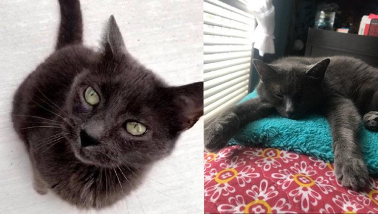 wjbk-wixom cat killed-101018_1539195462682.jpg.jpg
