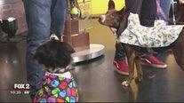 Dog debate: raincoats, yes or no?