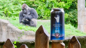 Griffin Claw Brewing releases banana stout beer, highlighting gorilla conservation at Detroit Zoo