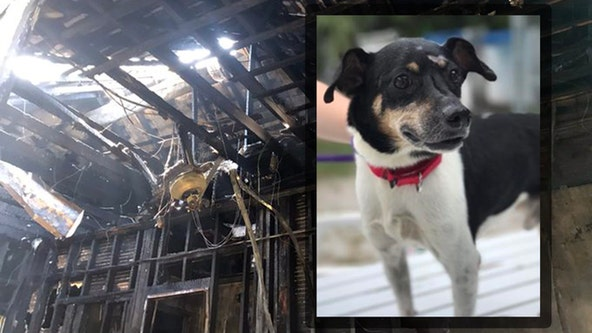 Dog dies in fire after alerting family to danger