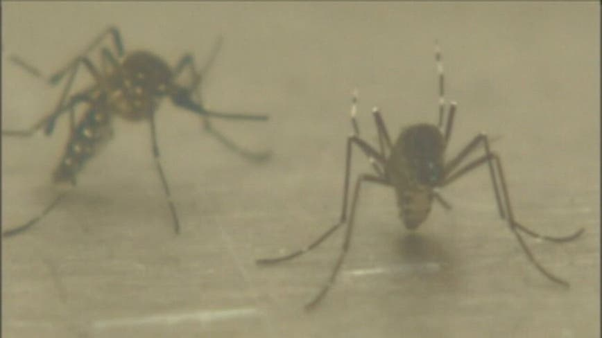 3 die of mosquito-borne virus EEE, health officials warn of evening outdoor events
