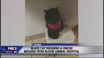 Livonia Bloom Animal Clinic looking for lost black cat in red onesie