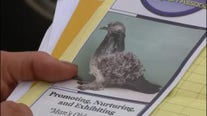 Sterling Heights family outraged at pigeon ordinance