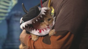Halloween Safety for the Pets