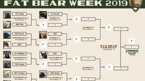Alaska's Katmai National Park & Reserve kicks off annual 'Fat Bear Week'