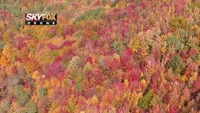 Michigan's insane fall colors have arrived in all their glory