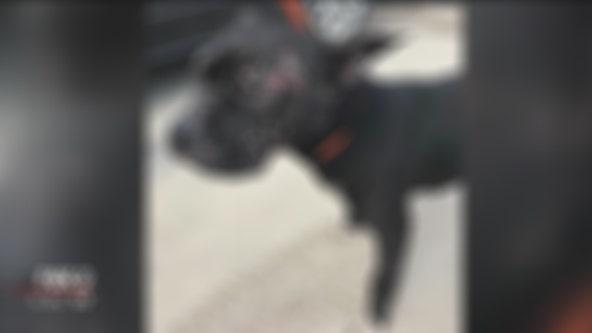 Dog fighting bait animal found dumped near I-75 in Hazel Park