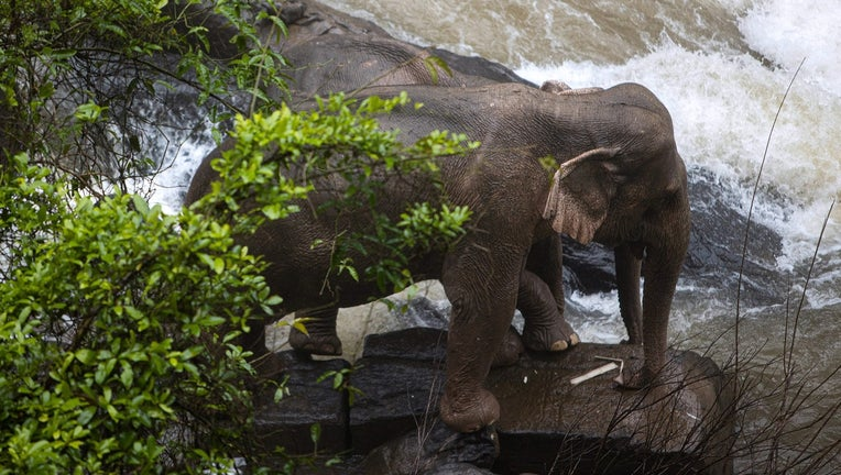 GETTY_elephants_bangkok.jpg