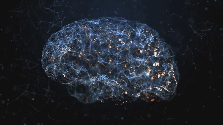 The science of your brain