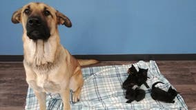 Dog found shielding kittens from cold on side of Canada road