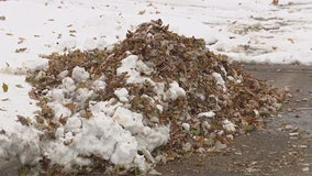 Another victim of our record-breaking snowfalls? City leaf pickup programs