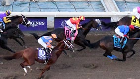 Horse euthanized after injury at Breeders' Cup Classic, 37th horse death at track since December