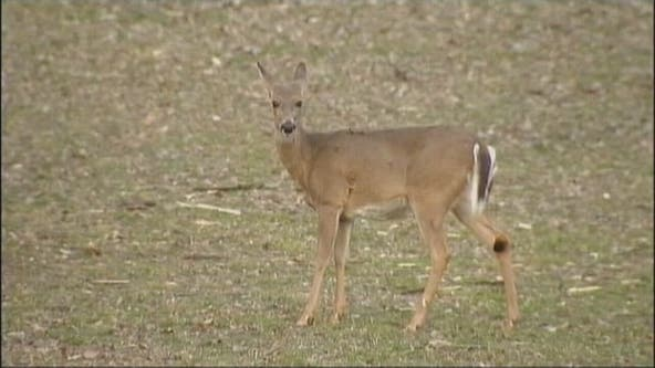 Hunters hit the woods Friday for start of firearms deer season