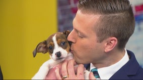 Cute Puppies on The Nine for National Mutt Day