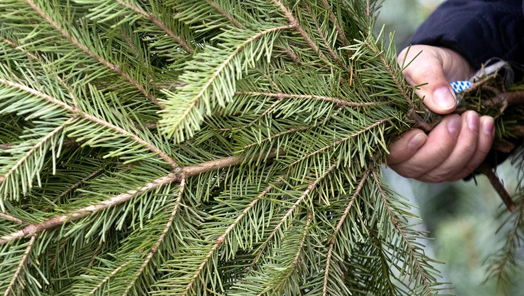 FILE: A man holds a fir tree branch. Old Christmas trees are being collected by a Texas man who is transforming them into canes for veterans.