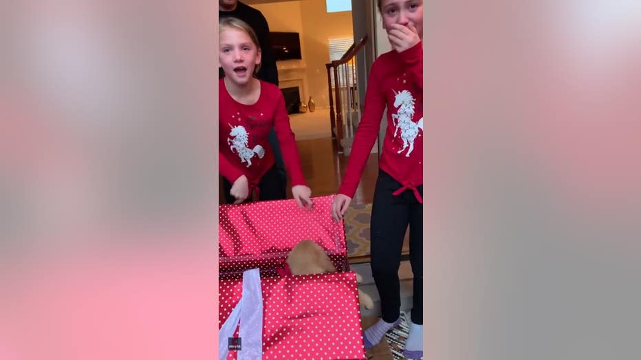 Commerce Twp girls react to getting a puppy for Christmas.