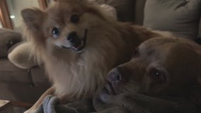 Woman speaks up after losing dogs in house fire
