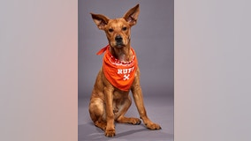 Michigan pup will compete in this year's Puppy Bowl