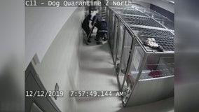 Oakland County Animal Shelter changes policies after dog bite injures shelter worker