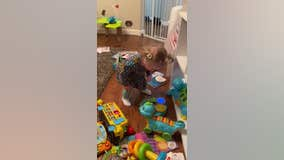 VIDEO: Michigan toddler can't stop dancing when she hears for the first time