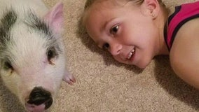 Third grader creates organization to save unwanted pet pigs
