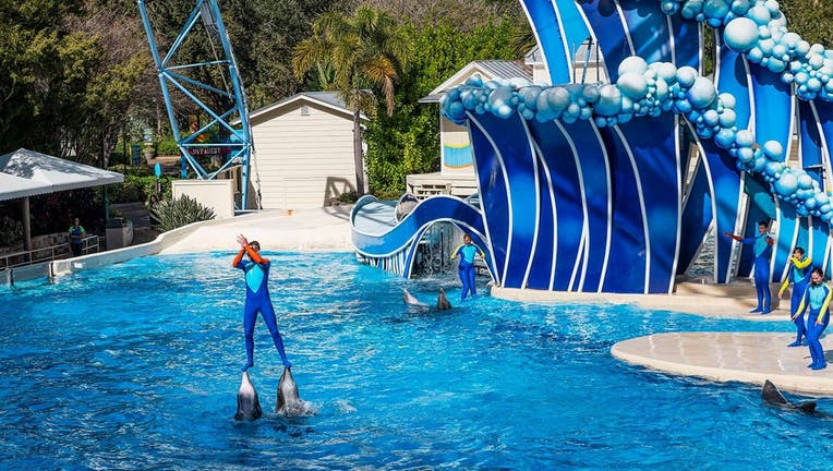 """In the most objected-to stunt, performers would ride two dolphins at the same time by standing with each foot atop one of the animals' beaks, or """"rostrums."""" (Photo by John Greim/LightRocket via Getty Images)"""