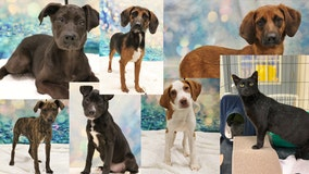 Adopt one of these 7 adorable dogs and cats a Dearborn shelter took in from out of state