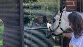 Therapy horse surprises quarantined Georgia seniors through bedroom window