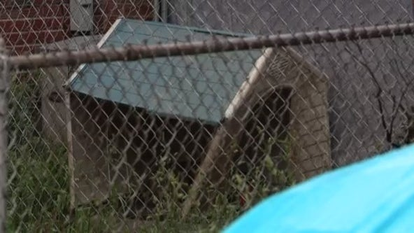 Pit bull bites toddler, injures pregnant woman after going over fence on Detroit's east side