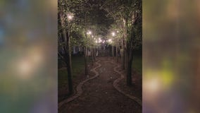 Jill of All Trades puts up landscape lighting