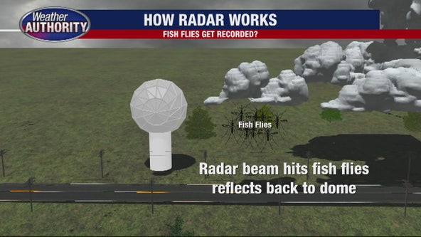 Radar picks up Fish Flies