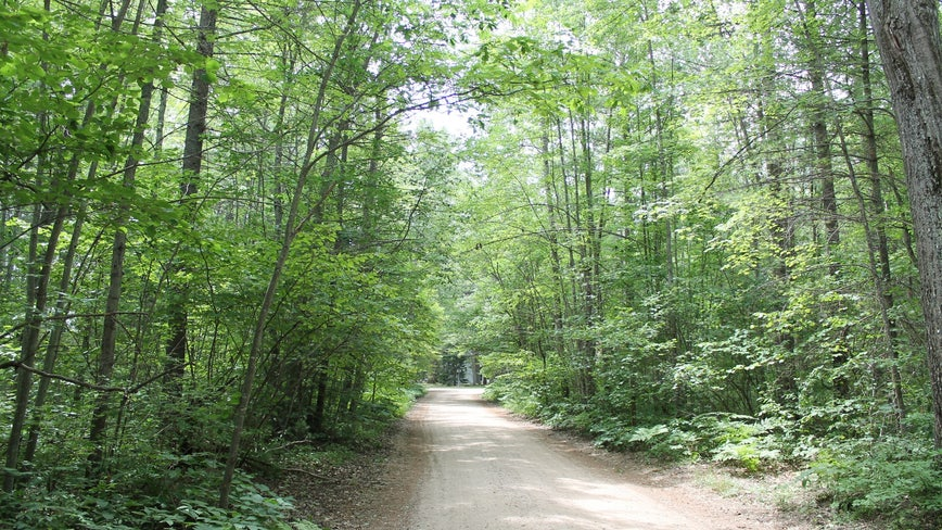 225 plots of DNR-owned land up for auction, including lakefront and forested parcels