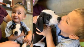 Michigan parents adopt puppy with cleft lip for son, 2, born with cleft lip