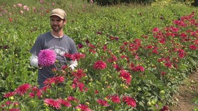 Oxford man's dahlia farm one of the biggest in the country