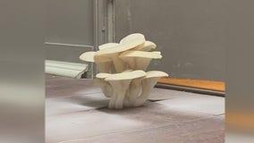 What the fungus? Landlord's leaky roof grows mushrooms in Utica gym