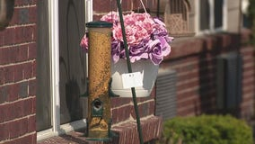 Oakland County man installs bird feeders for seniors during COVID-19 pandemic
