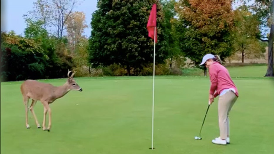 Pro golfer Jason Michael Dudzinski and his fiancée Katie Nolff were visited by a young deer while enjoying a day on the golf course.