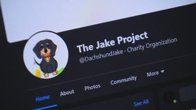 The Jake Project - meet the little dog who sniffs out money for a good cause