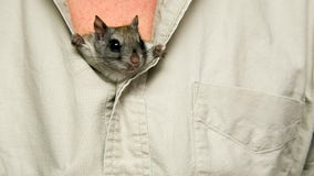 Florida wildlife investigators bust million-dollar flying squirrel trafficking ring