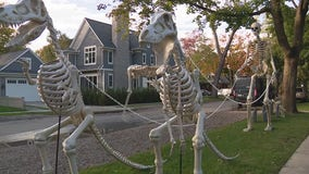 Michigan father and sons decorate for Halloween with larger-than-life skeleton display